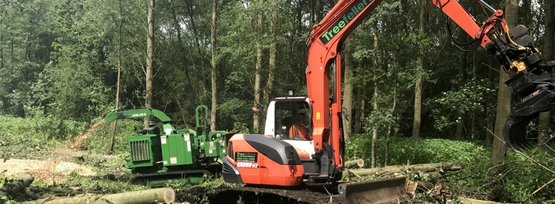 Tree felling and woodland clearances