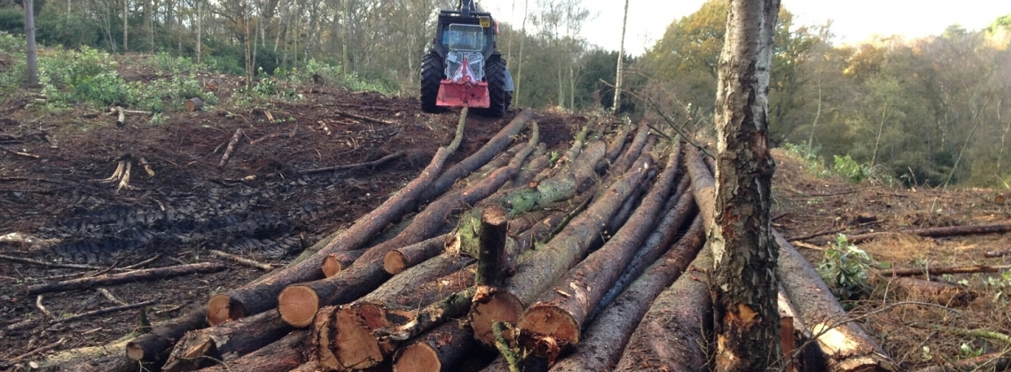 Forestry winching for timber extraction