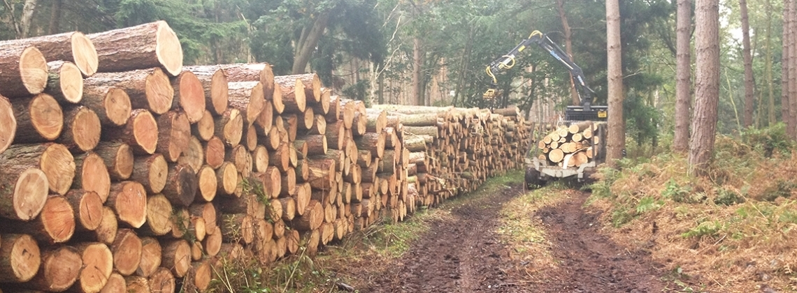 Timber extraction using forestry tractor and timber crane